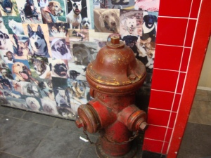 DownTown Dogs Fire Hydrant